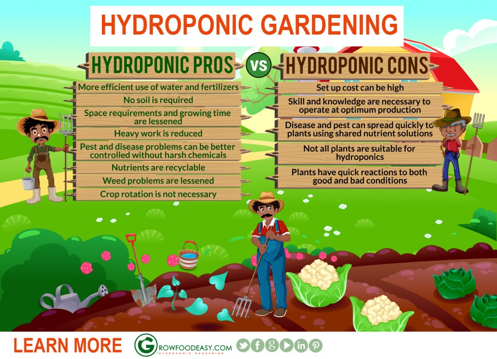 Hydroponic Gardening Is Easy To Setup and Grow